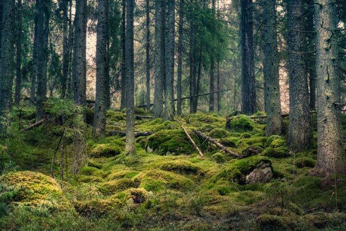 Lesníkov trápi stav slovenských lesov, riešenie vidia v ich obnove