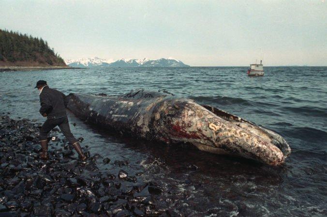 Na americkom pobreží nachádzajú neobvyklé množstvo mŕtvych veľrýb, na Aljaške našli už tretiu