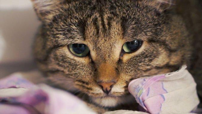 Ostatky zvierat našli v prepravkách aj košoch, majiteľov útulku už súdia za týranie
