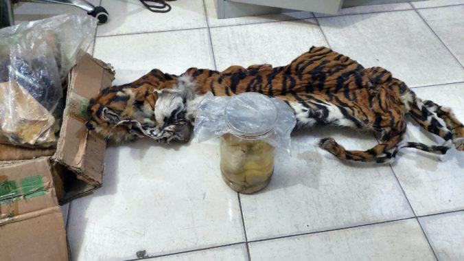 Foto: Polícia v Indonézii našla kožušinu ohrozeného tigra sumatrianskeho a štyri embryá v pohári