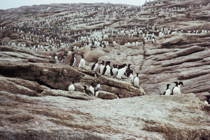 Vlna horúčav v Tichom oceáne pravdepodobne zabila milión vtákov, tvrdia vedci
