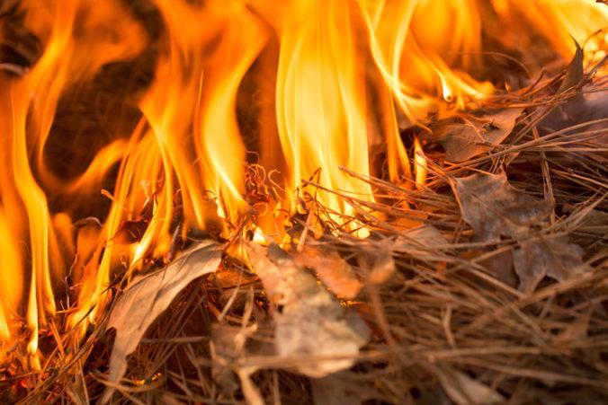 Mladí ľudia chceli počas lovu ohňom vyhnať zvieratá z úkrytov, sami zahynuli v plameňoch