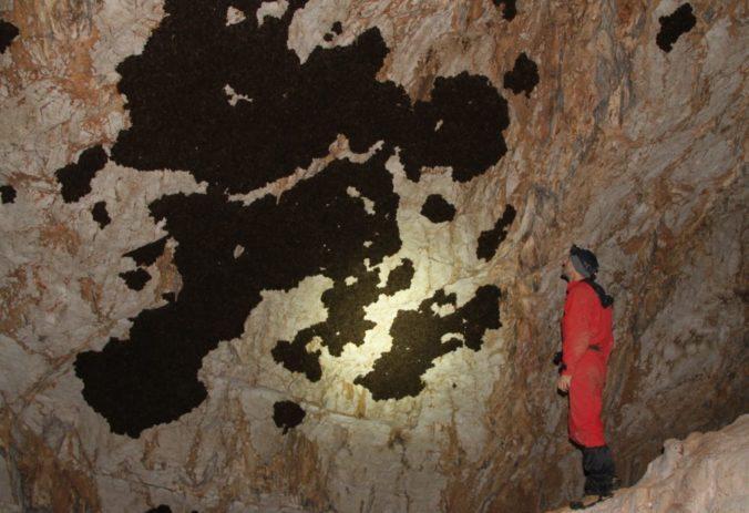 V Slovenskom krase začínajú so zimným sčítaním netopierov, žije tam viac než 20 druhov