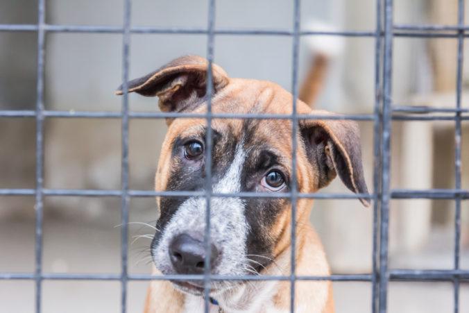 Pokusy laikov o odstránenie tráum môžu psovi viac uškodiť ako pomôcť, tvrdí psychologička psov