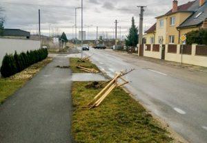 Neznámy páchateľ v Trenčíne vytrhal nové stromoradie, polícia po vandalovi už pátra (foto)