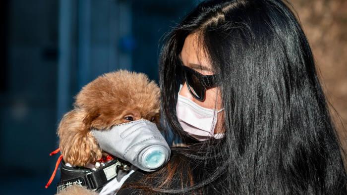 Koronavírus sa objavil u domácich zvierat, nakazili sa od majiteľov