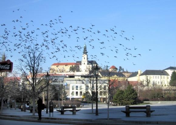 Nitra pristúpila k zmrazovaniu výdavkov, mesto funguje v krízovom režime