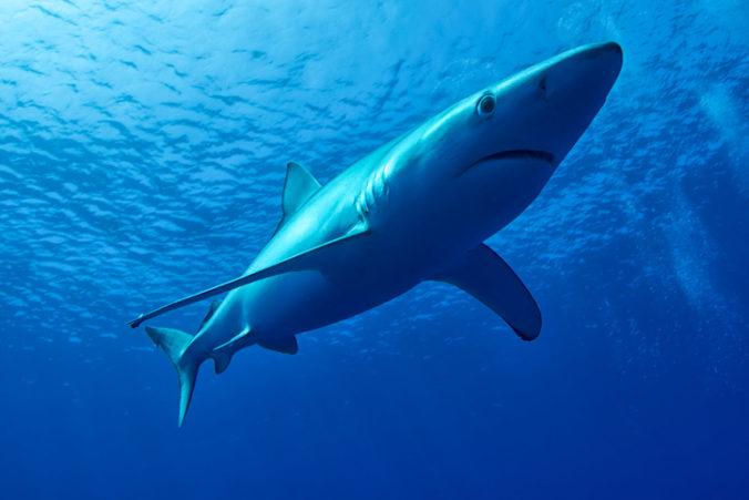 Na potápača v  Austrálii zaútočil žralok, záchranári už mladého muža nedokázali zachrániť