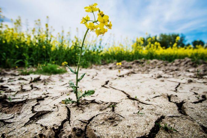 Európe hrozia čoraz častejšie extrémne suchá, pomôcť môže len zníženie skleníkových plynov