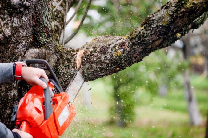 Mesto Pezinok vyrúbalo v Zámockom parku takmer štyridsať stromov, boli vážnym ohrozením
