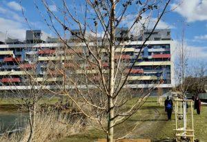 Bratislava vysadila tisíce stromov a kríkov, v iniciatíve plánuje pokračovať