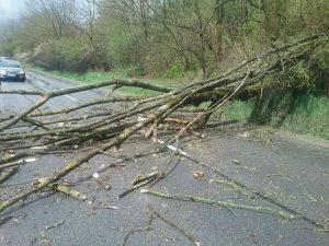 Nočné búrky si vyžiadali niekoľko zásahov hasičov, najviac práce mali s popadanými stromami